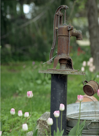 004-warden-old_h2o_pump-tulips-11-51-jpg