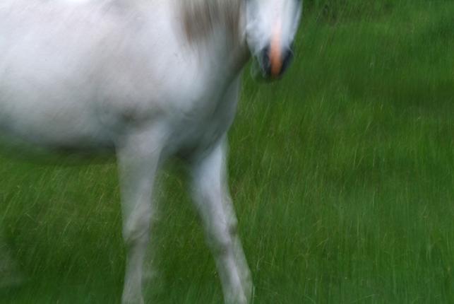 0030-607white_horse-green_grass-jpg