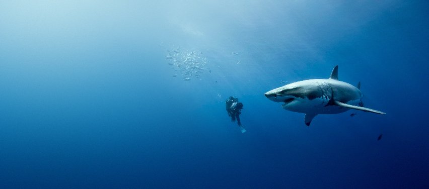 requin-montage8a-jpg
