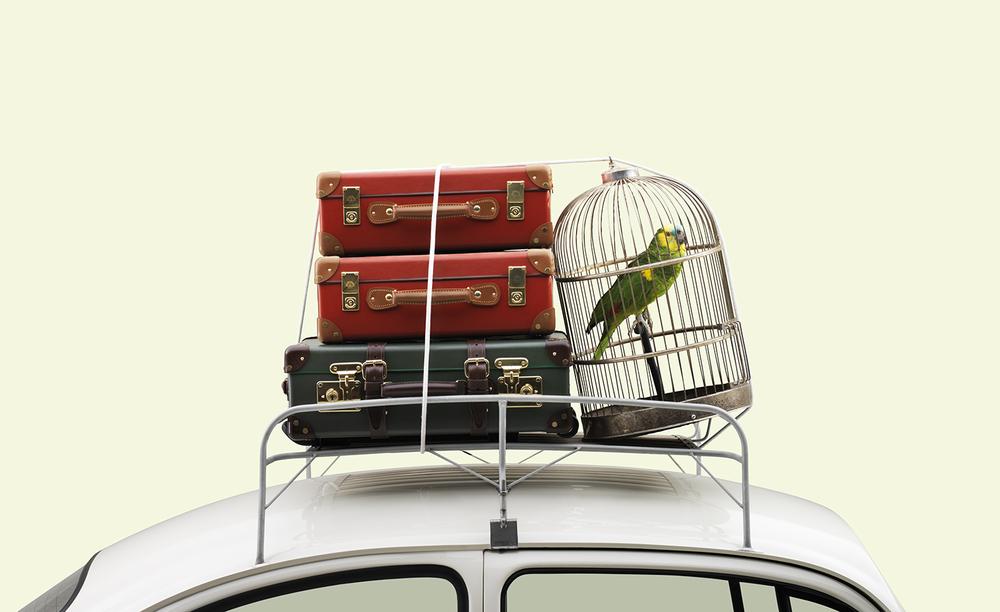parrot-v1-jpg