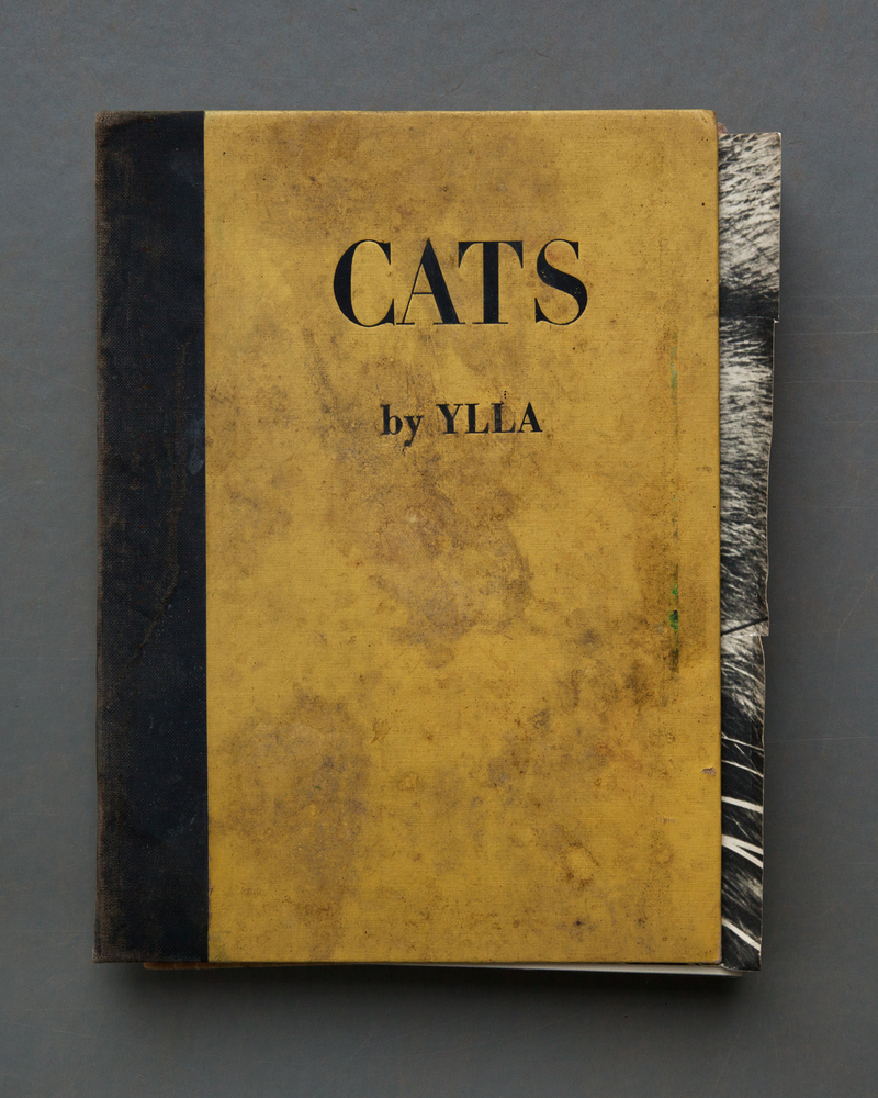 cats-jpg