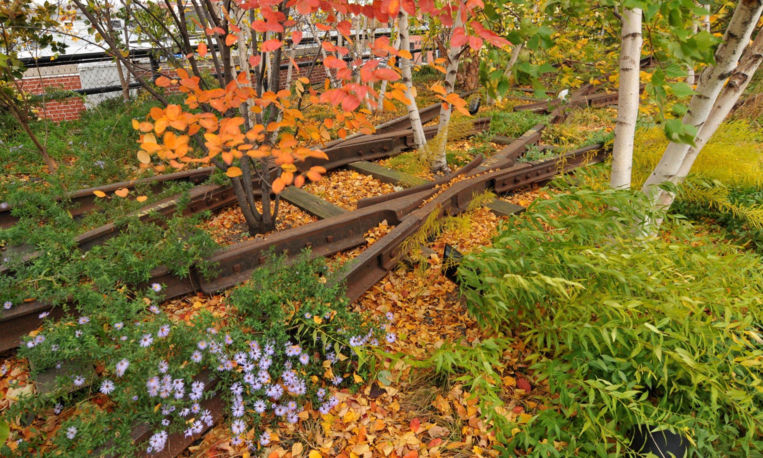 Donald Pels & Wendy Keys Gansevoort Woodland | The High Line