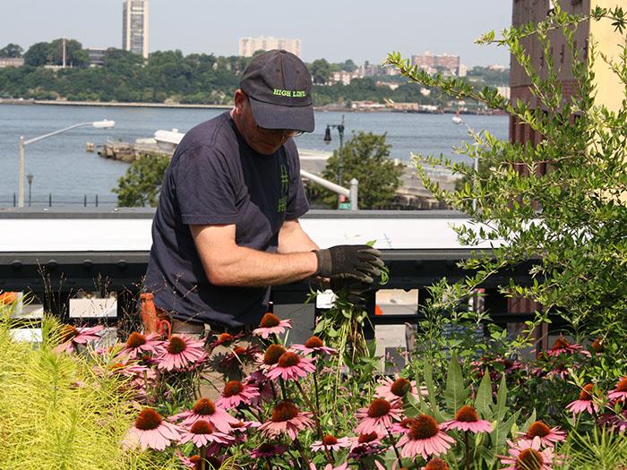 John weeding a plant bed