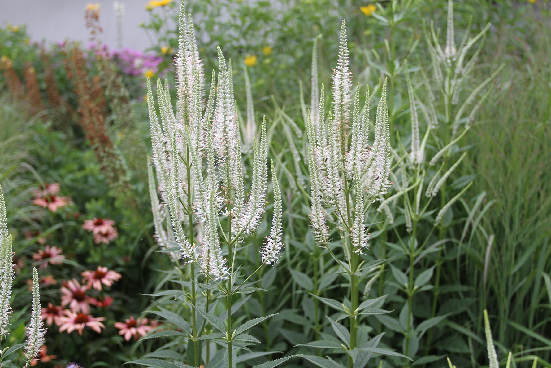 long white stalks of plants