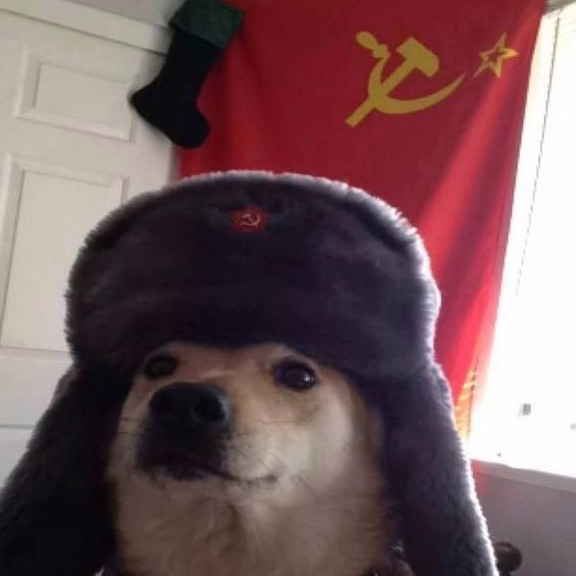 Vmxtpvq5twczomvyfnay_449721fa-ignore-all-cats-upvote-communist-dog-for-glory
