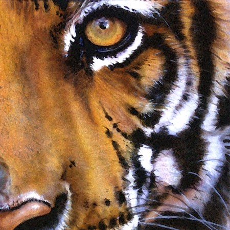 Jwgekobvq3o9jxcpags4_tiger-eye