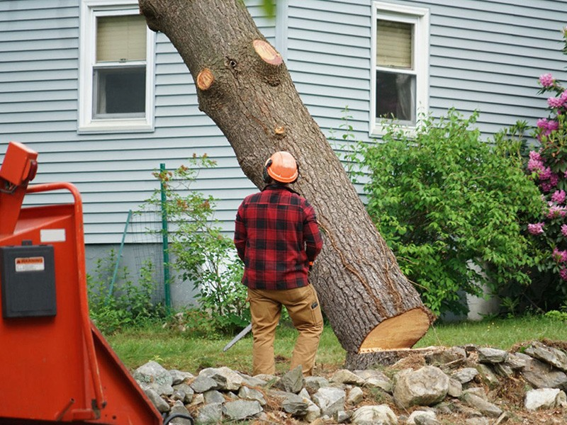Review of Professional Tree Removal Company Near Me ...