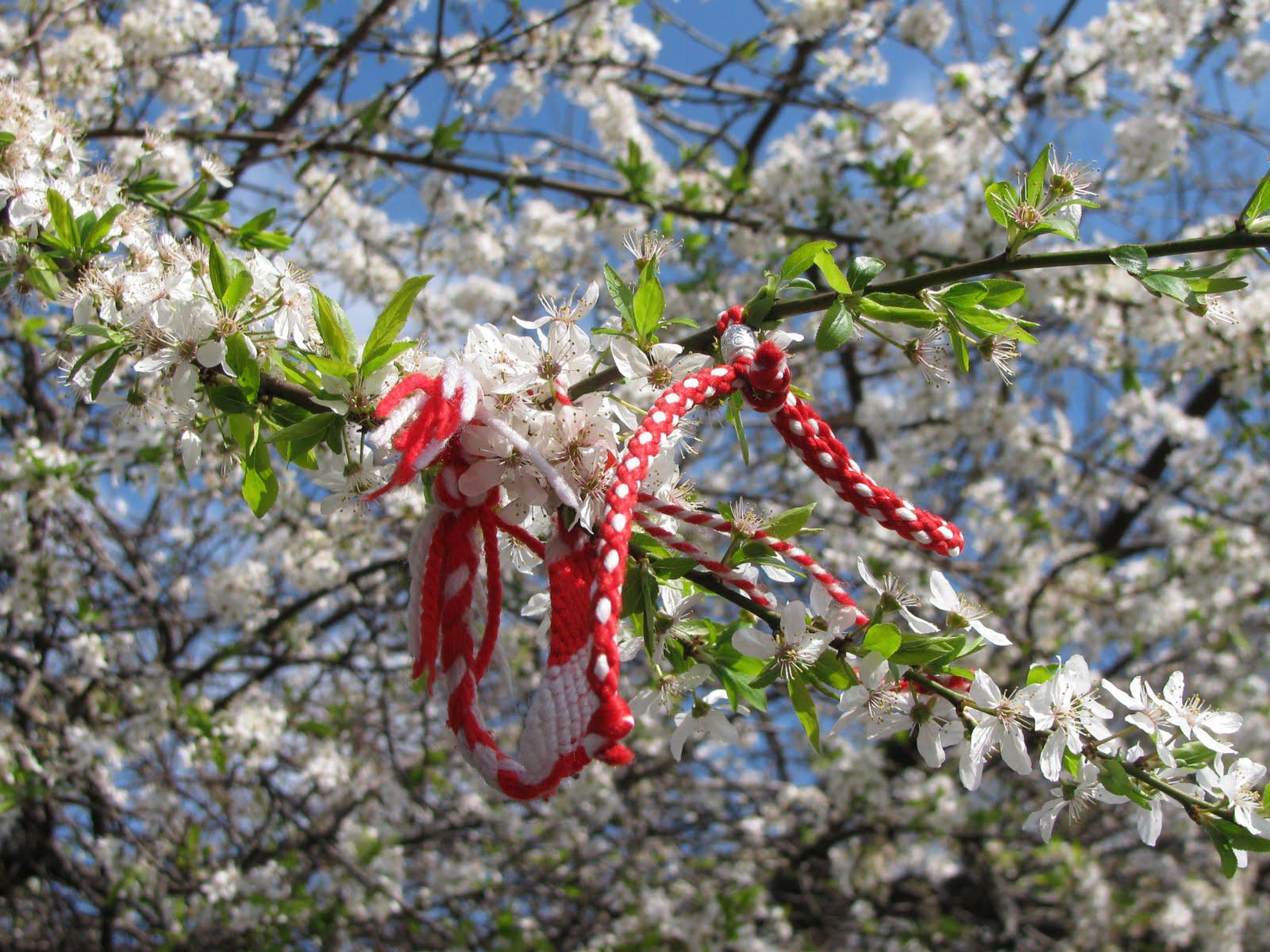 Tinctură cu flori de castan pentru frecarea picioarelor din varice