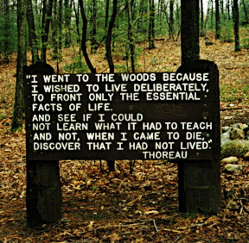 Eleventh grade Lesson The Wonder of Walden Woods | BetterLesson