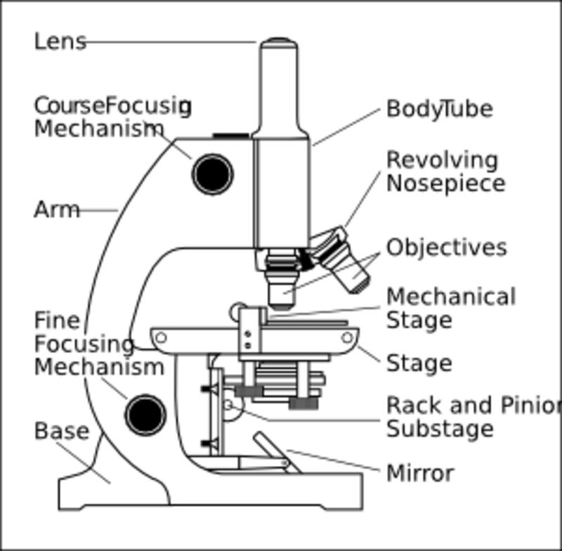 Ninth grade Lesson SKILL BUILDER: How to Use a Microscope
