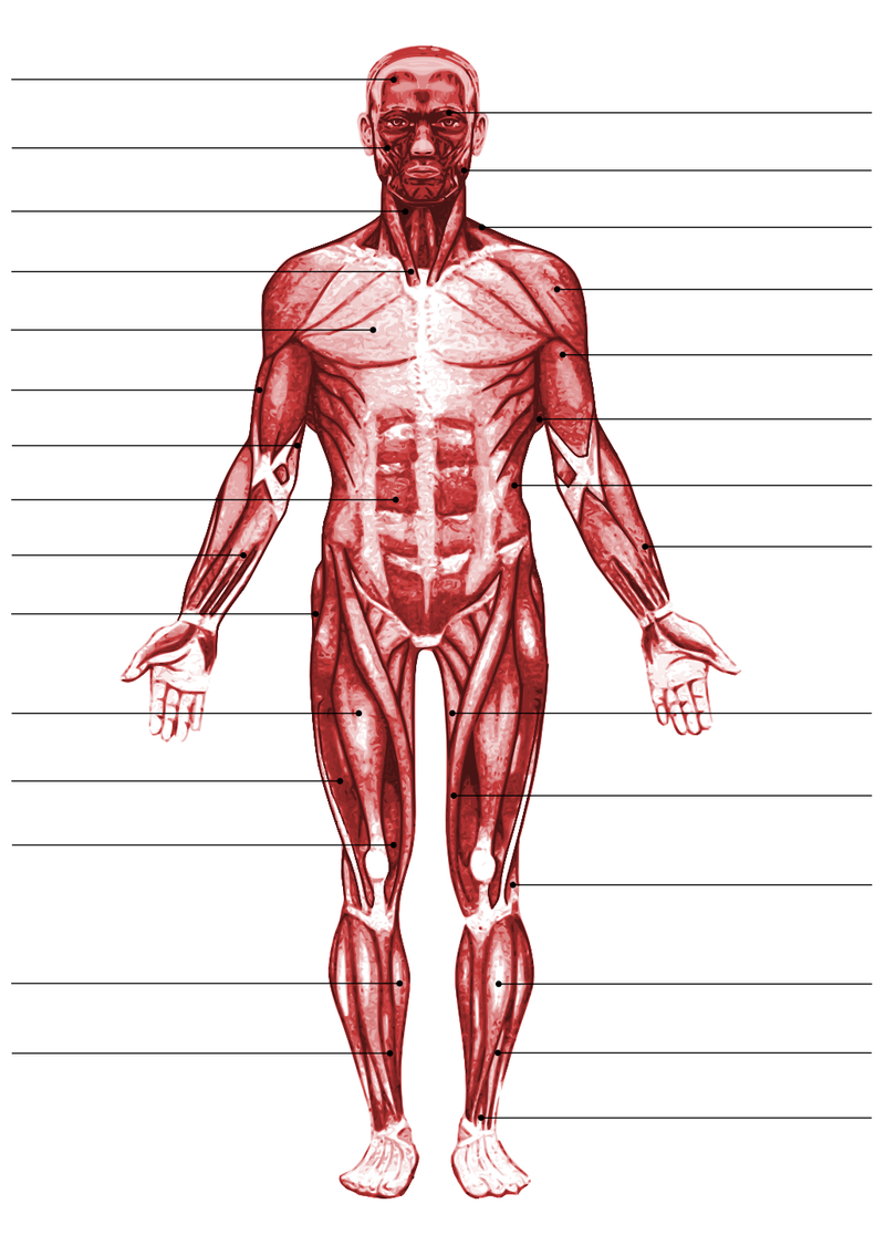 Fourth Grade Lesson The Muscular System Betterlesson