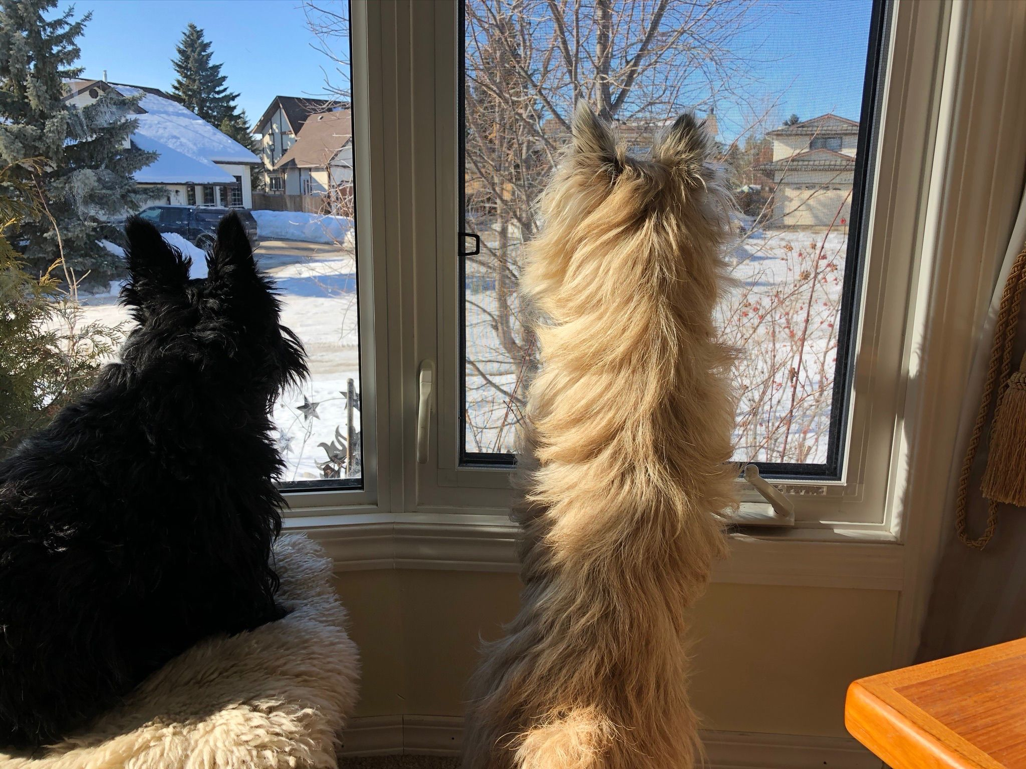 The kids on watch