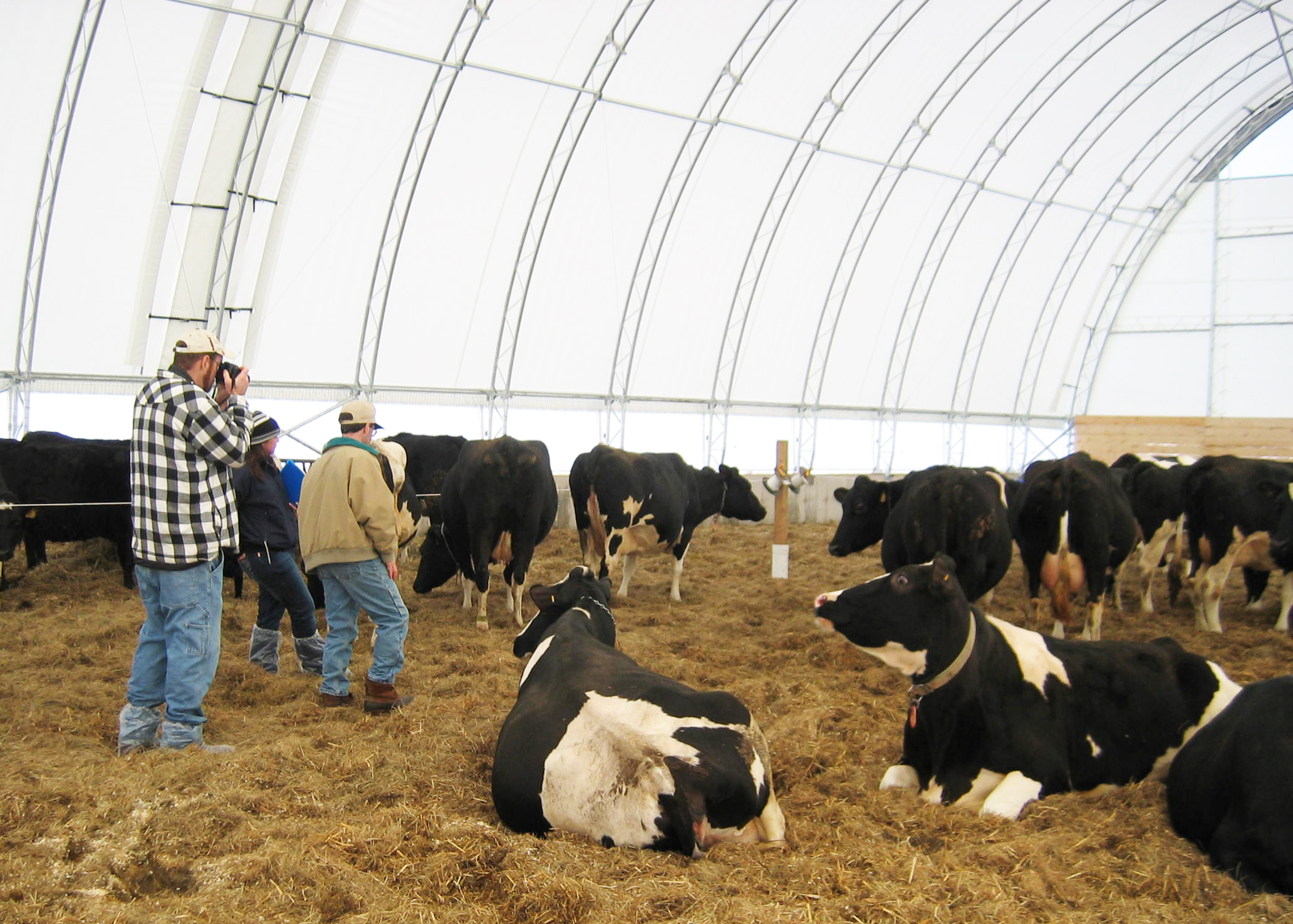 Shed Greenhouse Plans Consider Deep Pack Barns For Cow Comfort And Manure