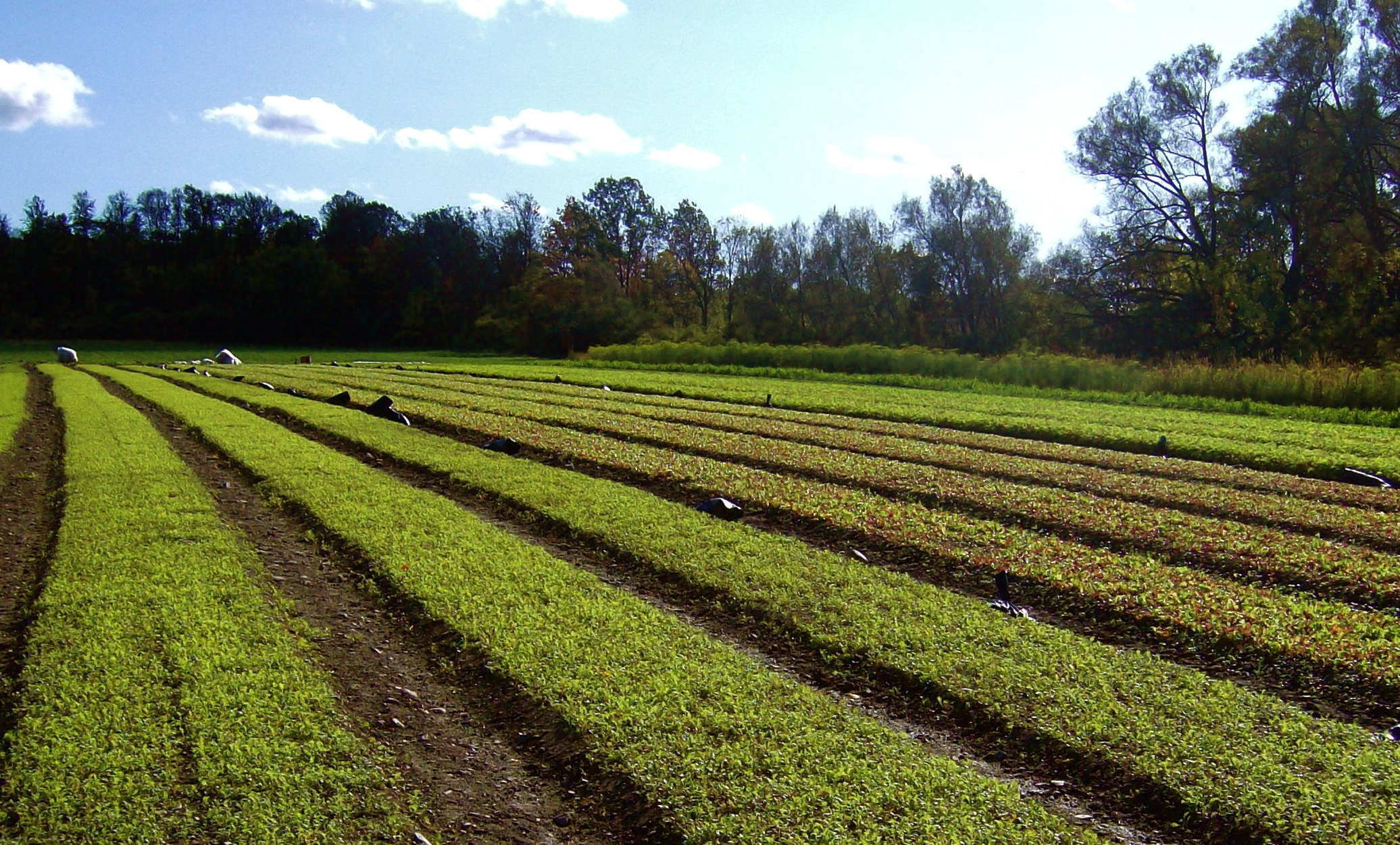 Is a Farm Loan Right for You? | Cornell Small Farms Program