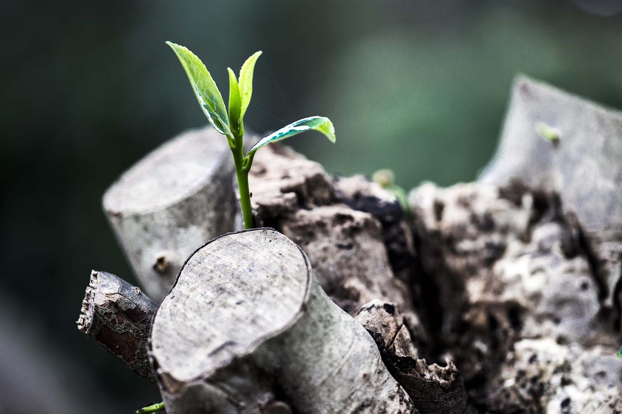 Pflanze-Zoegling