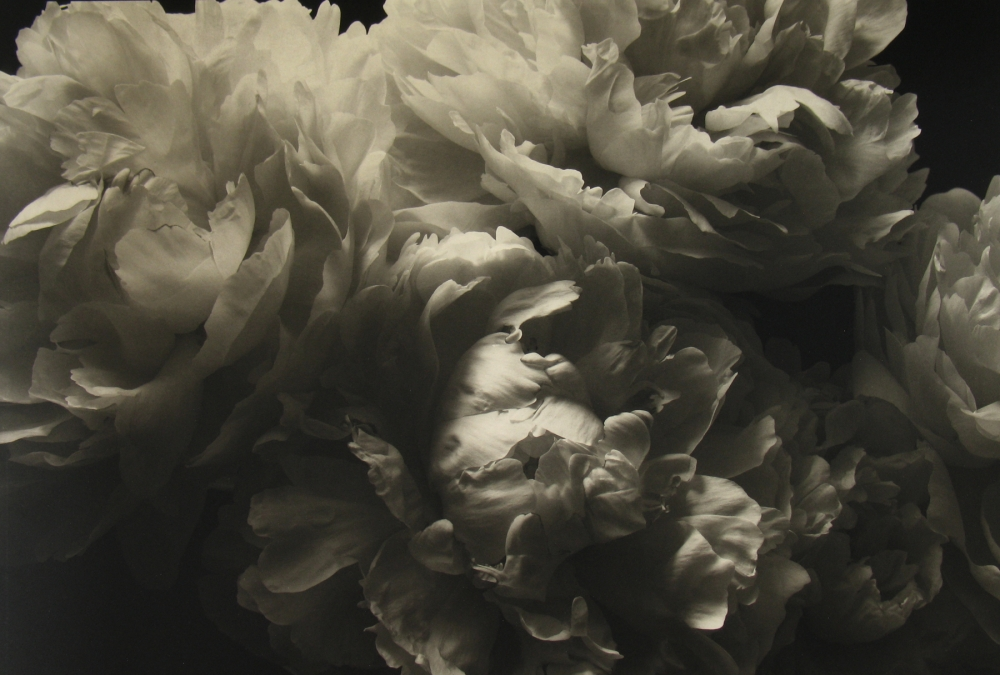Kenro Izu, Brushed with Light, Photography West, Howard greenberg gallery, 2019