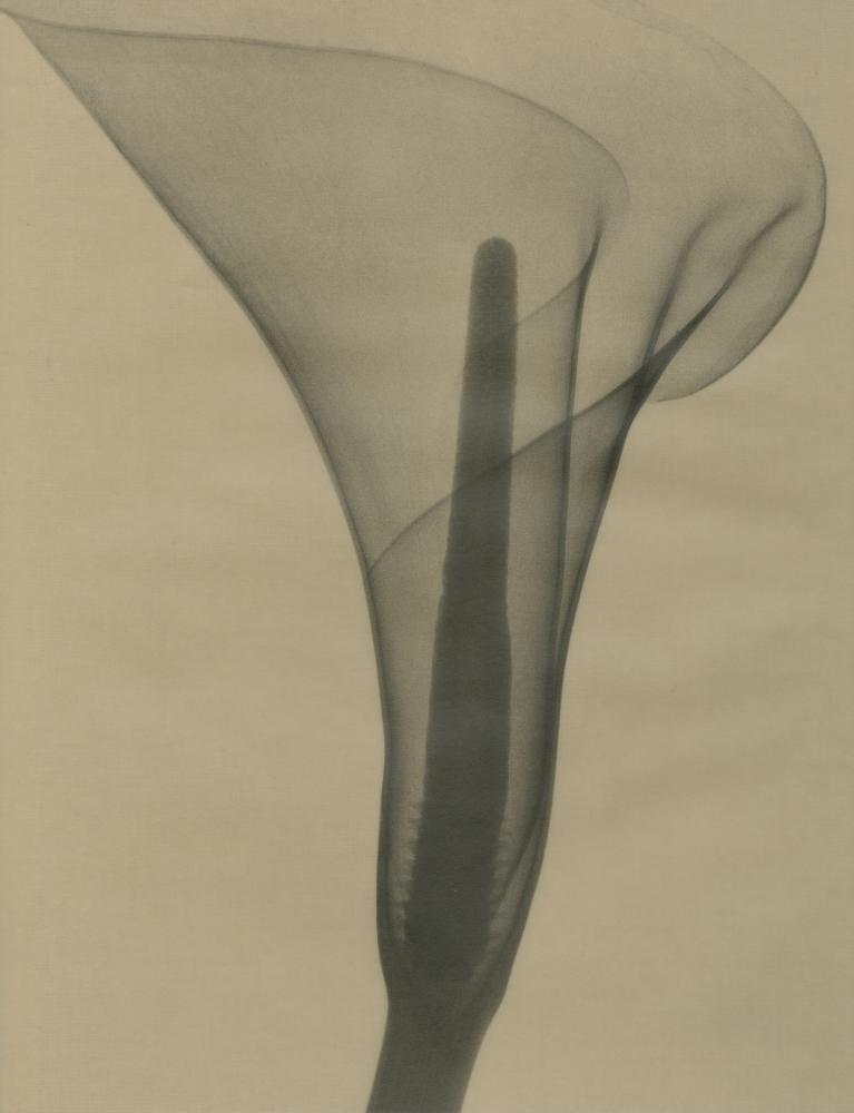 Dr. Dain L Tasker - Howard Greenberg Gallery and Stinehour Wemyss Editions - 2000