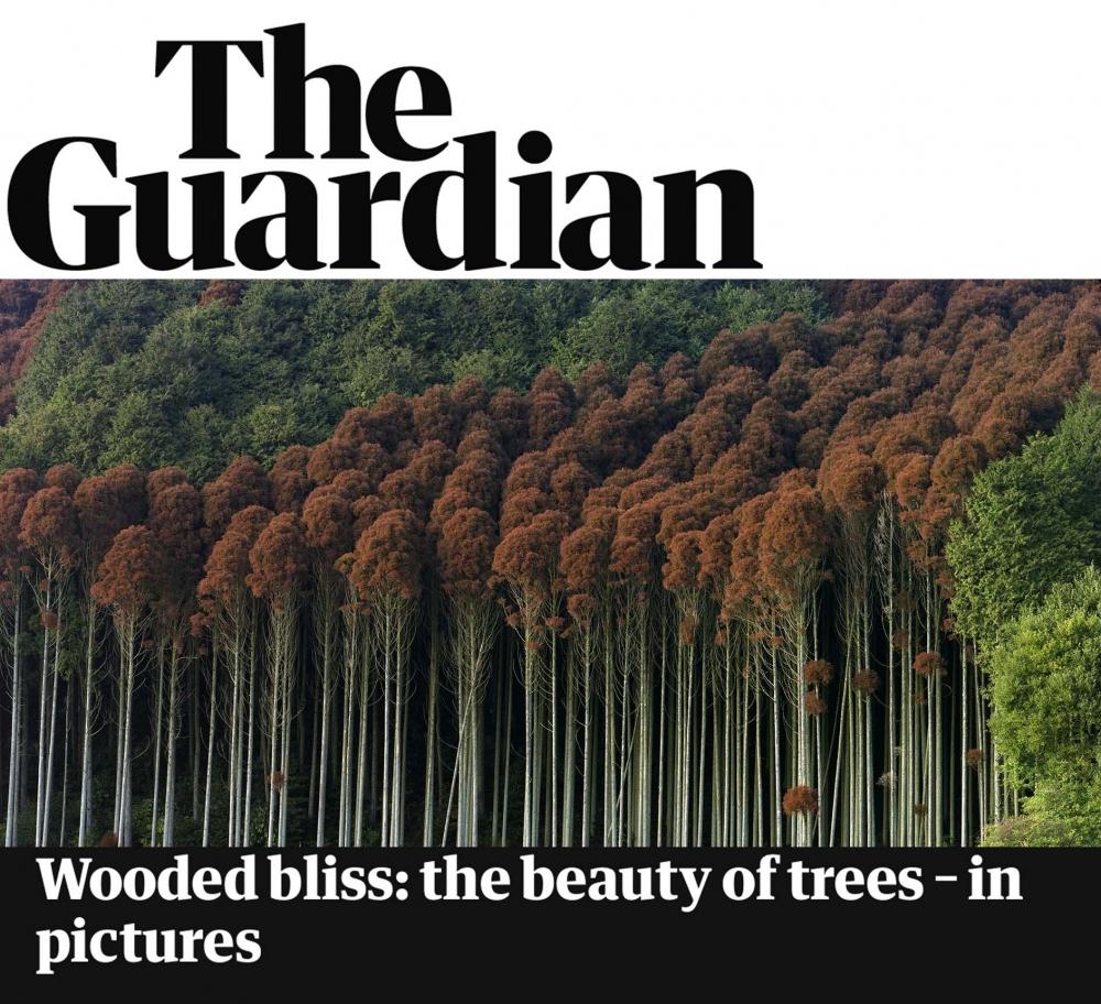 Yoko Ikeda & Toshio Shibata featured in The Guardian