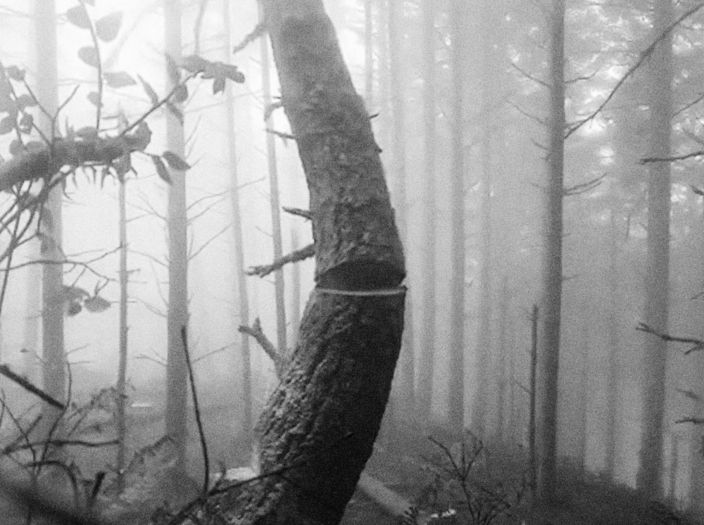 Julian Charrière in In the forest