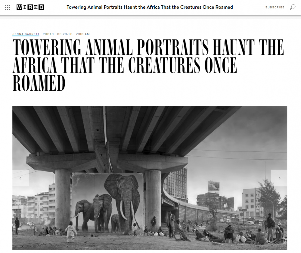 Nick Brandt: Towering Animal Portraits Haunt the Africa That the Creatures Once Roamed - Wired