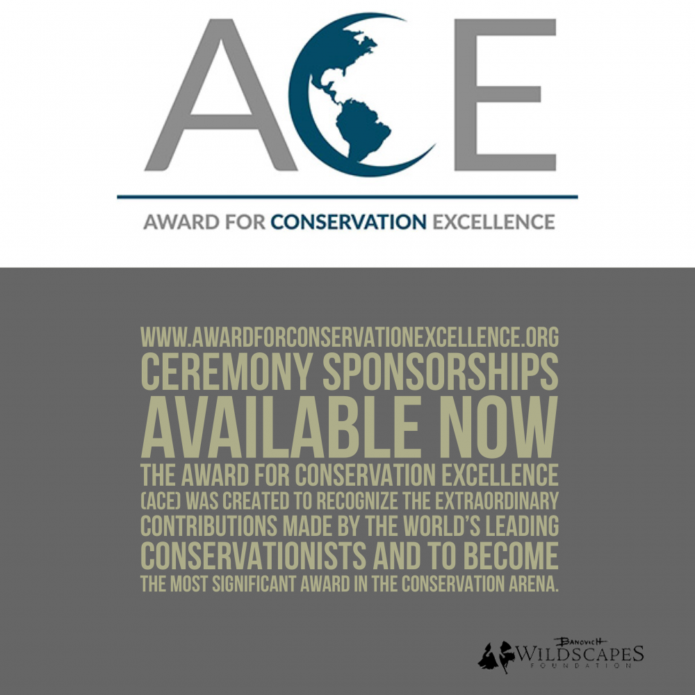 Partnership Opportunities Announced for the ACE Award Ceremony