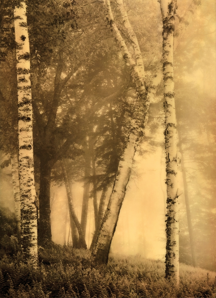 Trees in the Mist |  BY DAPHNE NIKOLOPOULOS