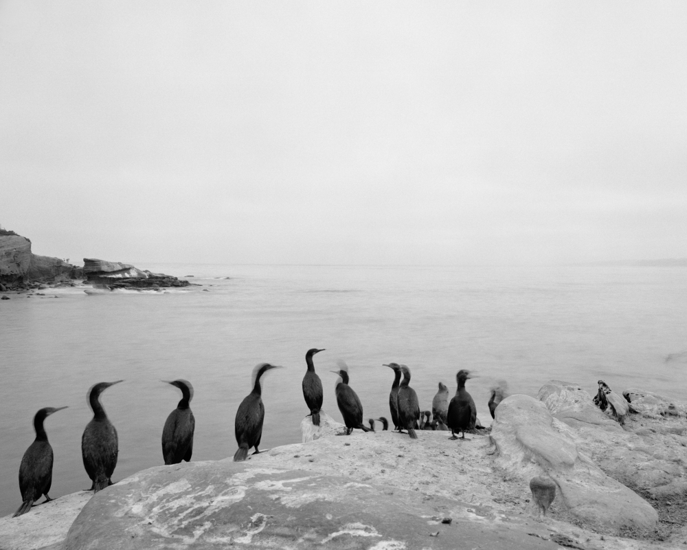 Jasmine Swope's exhibition, Our Ocean's Edge, at The La Jolla Historical Society