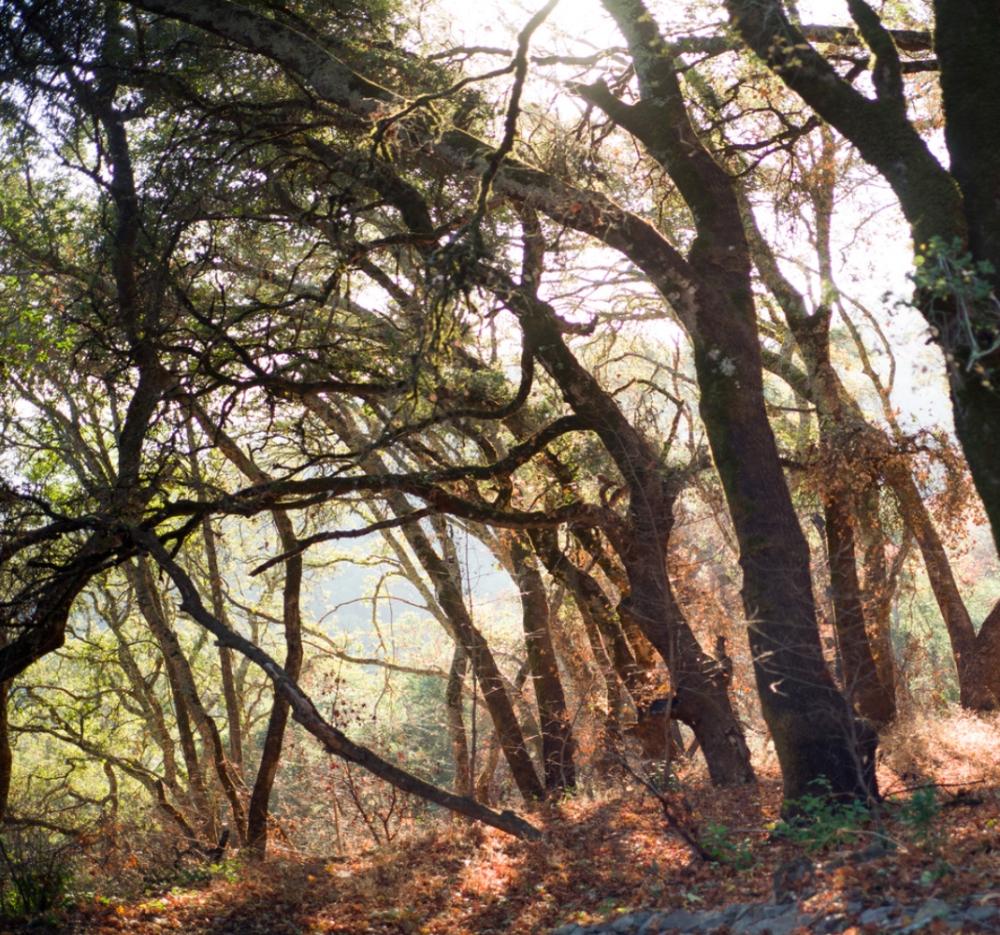 Forests blanket the large estate