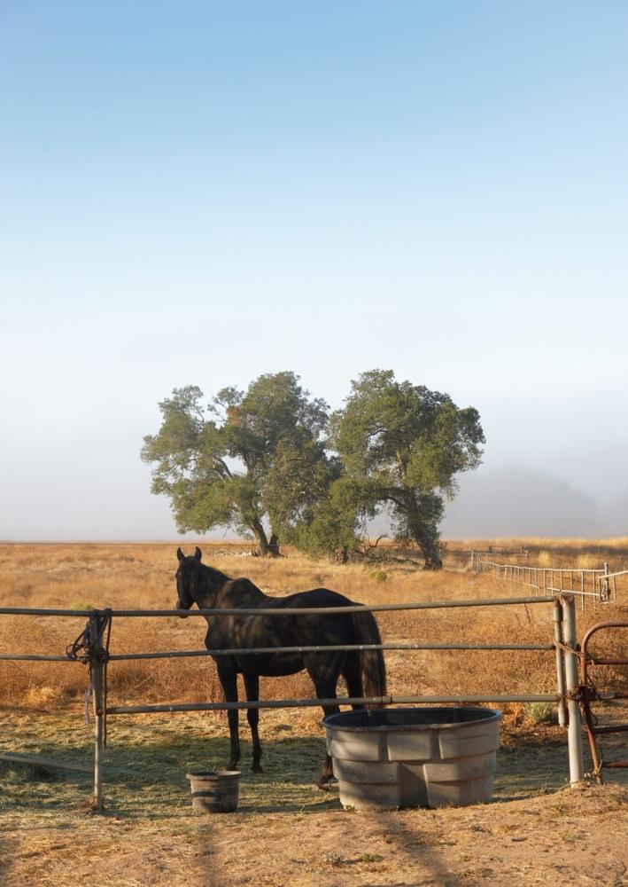 Horses still live on the Kenzo Estate property