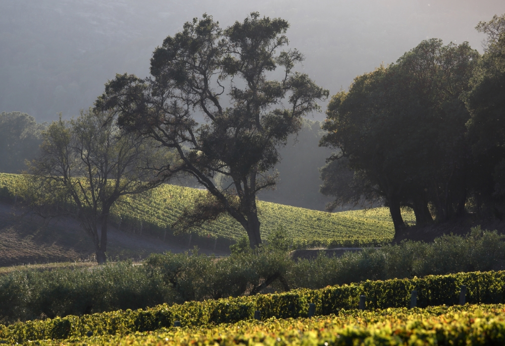 vineyards and old growth forest