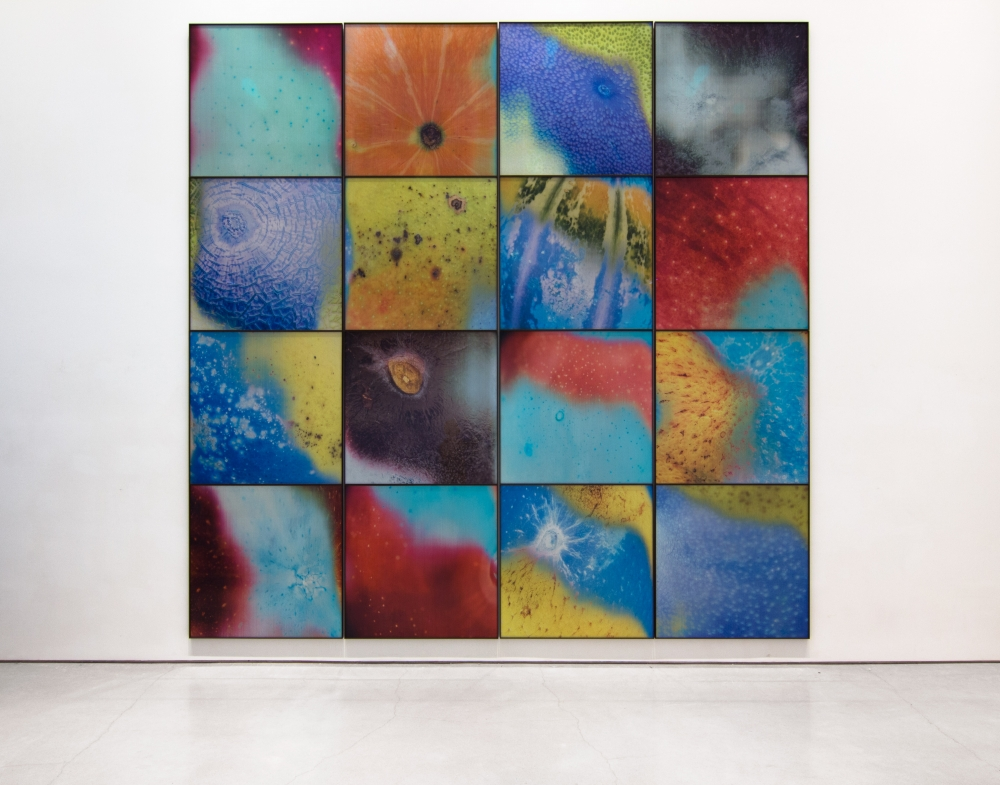 a four by four grid of colorful lenticular photographs of the skins of fruits hangs on a gallery wall