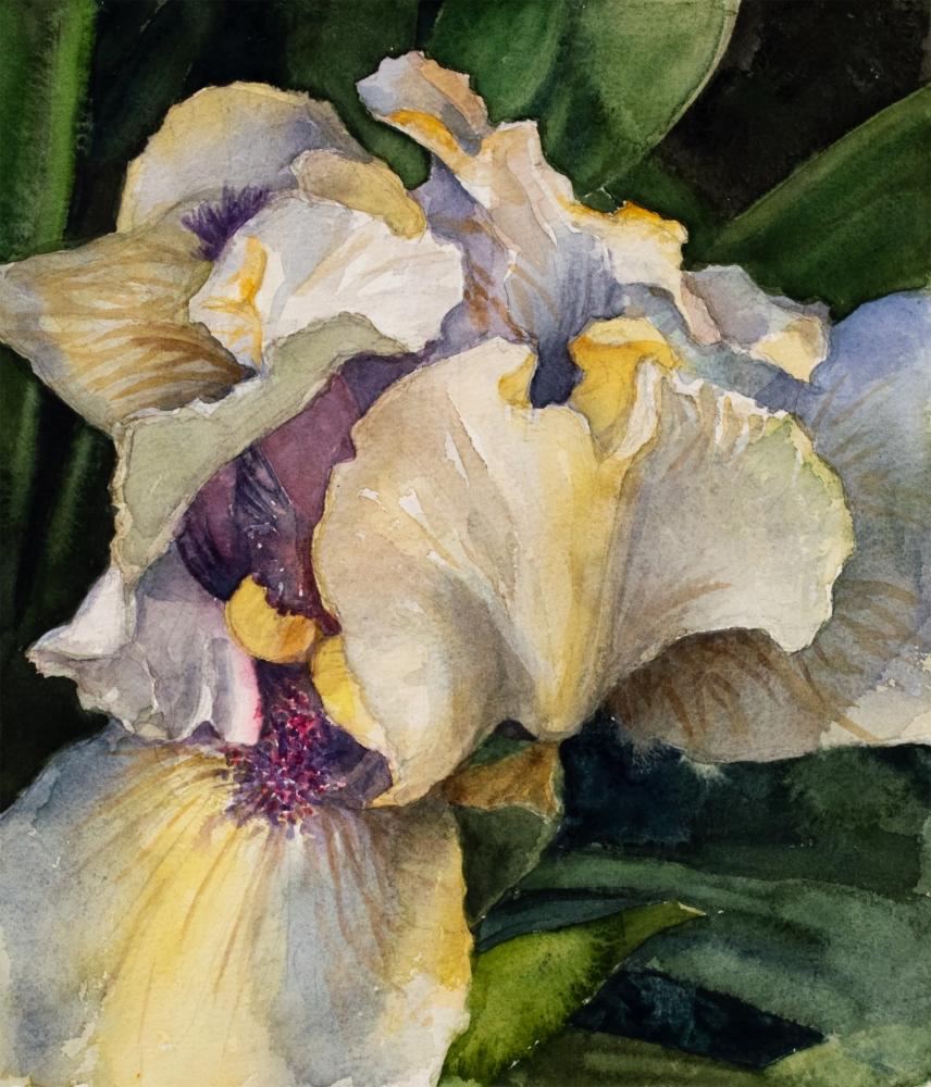 Bearded Iris, Watercolor, Eileen Goodman