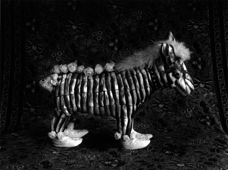 Michiko Kon zebra