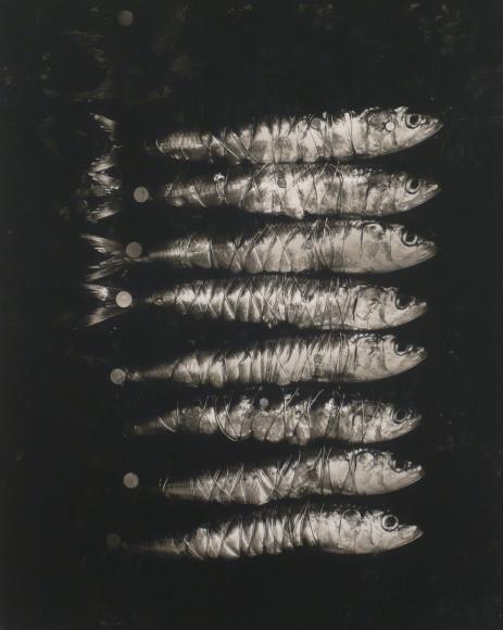 Michiko Kon, Sardines & Wire, 2002