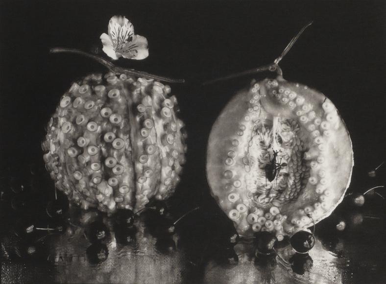 Michiko Kon, Octopus & Melon, 1987