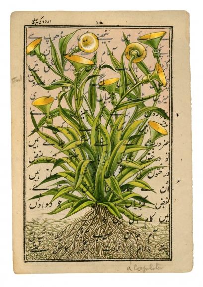 Stotik - trumpet flowers