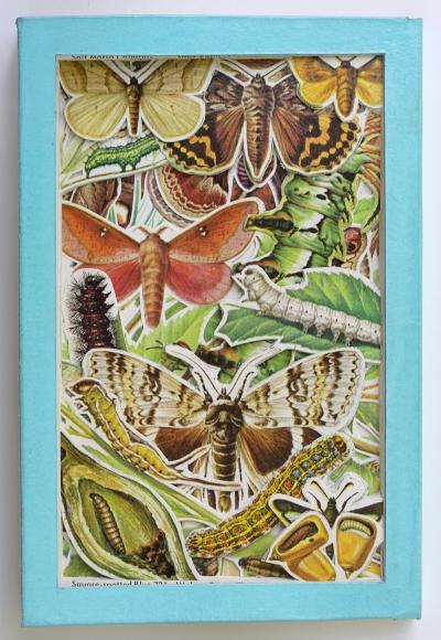 James Allen Book Excavation: Moths and Butterflies