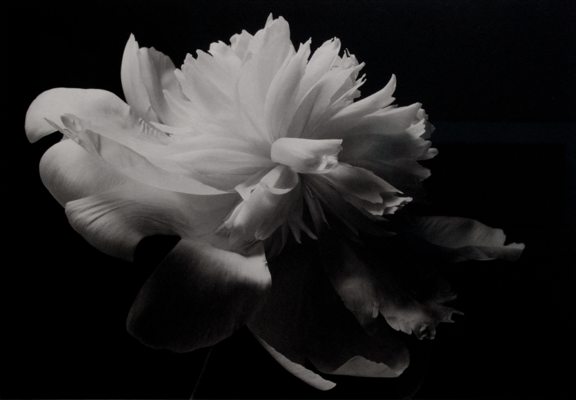 Kenro Izu: Still Life 2013 Howard Greenberg Gallery