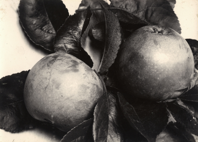 Charles Jones - Apple Blenheim Orange, c.1900 - Howard Greenberg Gallery
