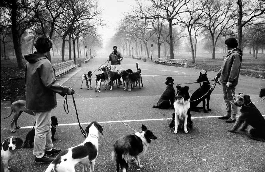 Alfred Eisenstaedt - Dog walking in Central Park, NYC, 1964 - Howard Greenberg Gallery