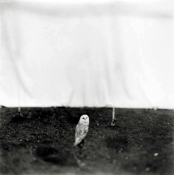 Keith Carter - Barn Owl, 1998 - Howard Greenberg Gallery