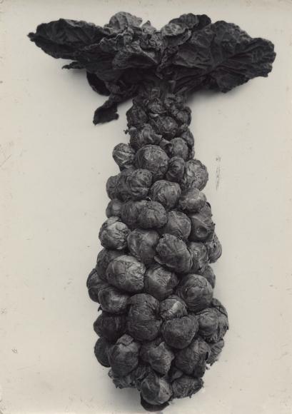 Charles Jones - Brussels Sprouts, c.1900 - Howard Greenberg Gallery