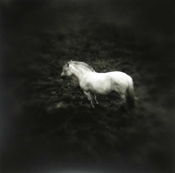Keith Carter - Norwegian Pony #1, 2005 - Howard Greenberg Gallery