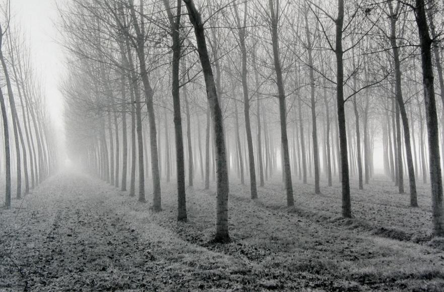 Mark Citret - Poplars, Po River Valley, 1998 - Howard Greenberg Gallery
