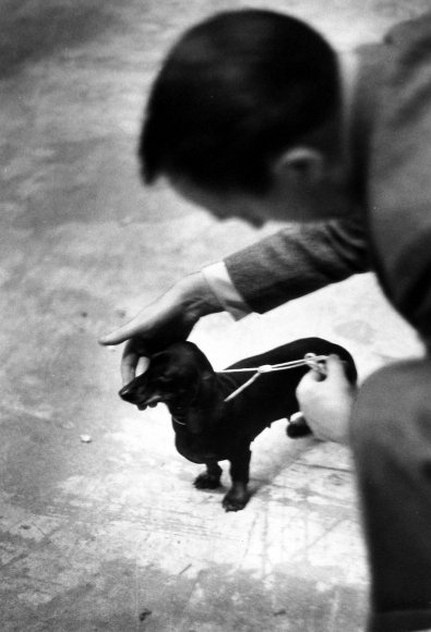 Ruth Orkin - Man Patting Dachshund, c.1959 - Howard Greenberg Gallery