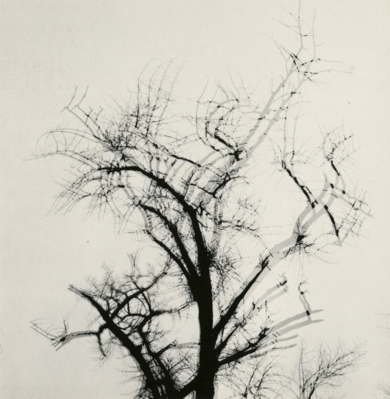 Harry Callahan - Multiple Exposure Tree, 1956 - Howard Greenberg Gallery