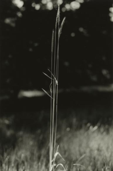 Dorothy Norman - Woods Hole, 1932 - Howard Greenberg Gallery