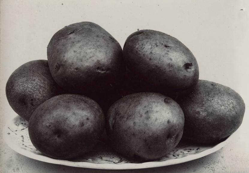 Charles Jones - Potato Northern Star, c.1900 - Howard Greenberg Gallery