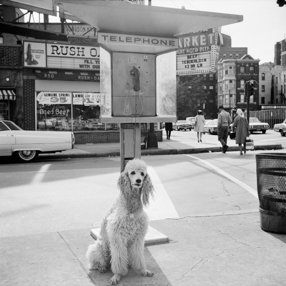 Vivian Maier - Chicago, IL, c.1960 - Howard Greenberg Gallery