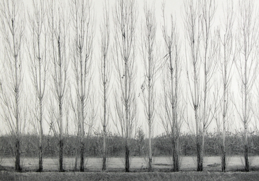 Mark Citret - Orchard and Windbreak, San Joaquin Valley, 2003- Howard Greenberg Gallery